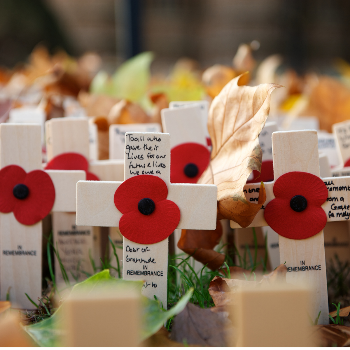 Remembrance day crosses and poppies