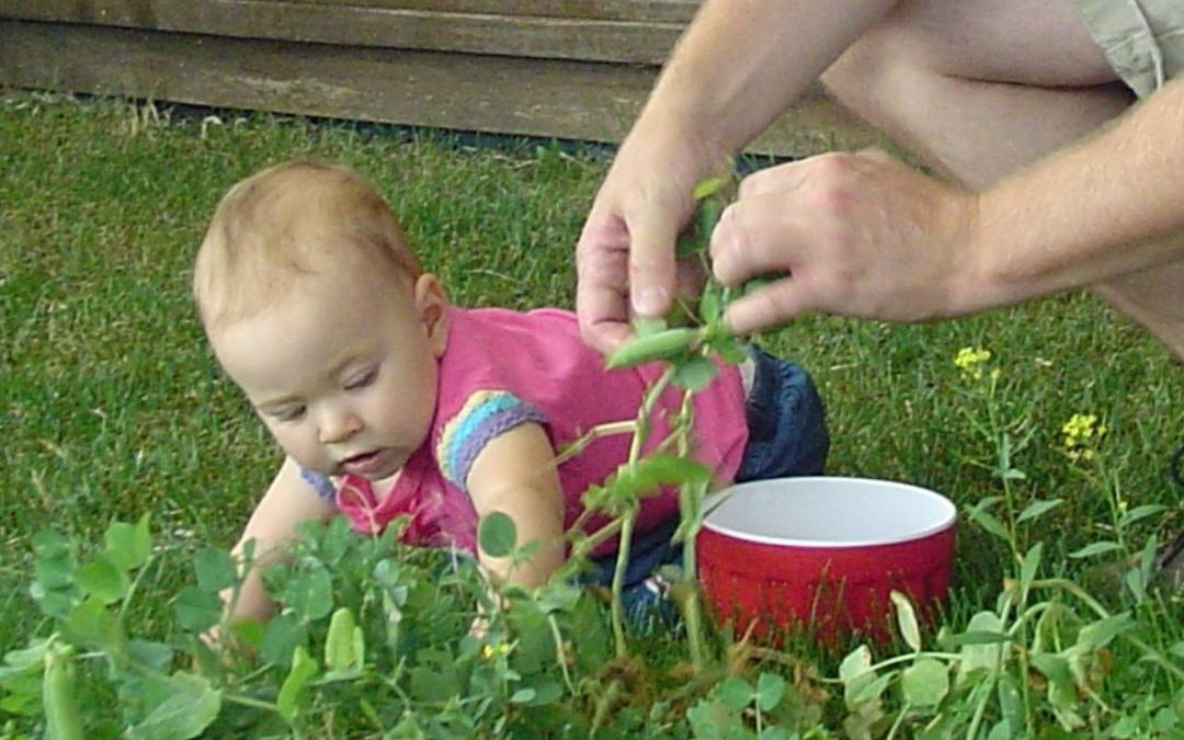 Your little gardener-to-be